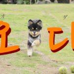 koreanword-come