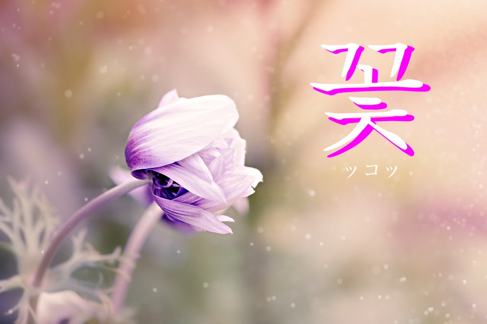 韓国語で「花」の【꽃(ッコッ)】をタメ語で覚えよう!