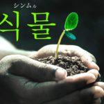koreanword-plant