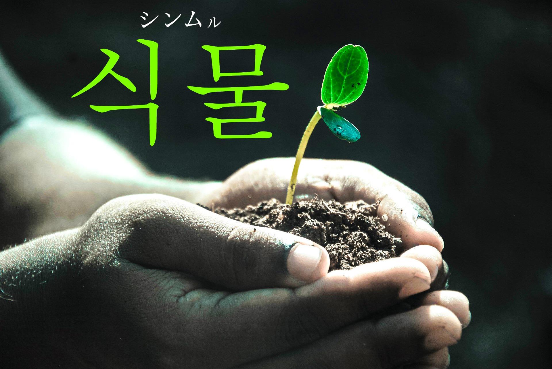 韓国語で「植物」の【식물(シンムル)】をタメ語で覚えよう!