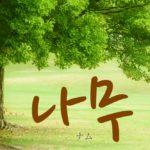 koreanword-tree