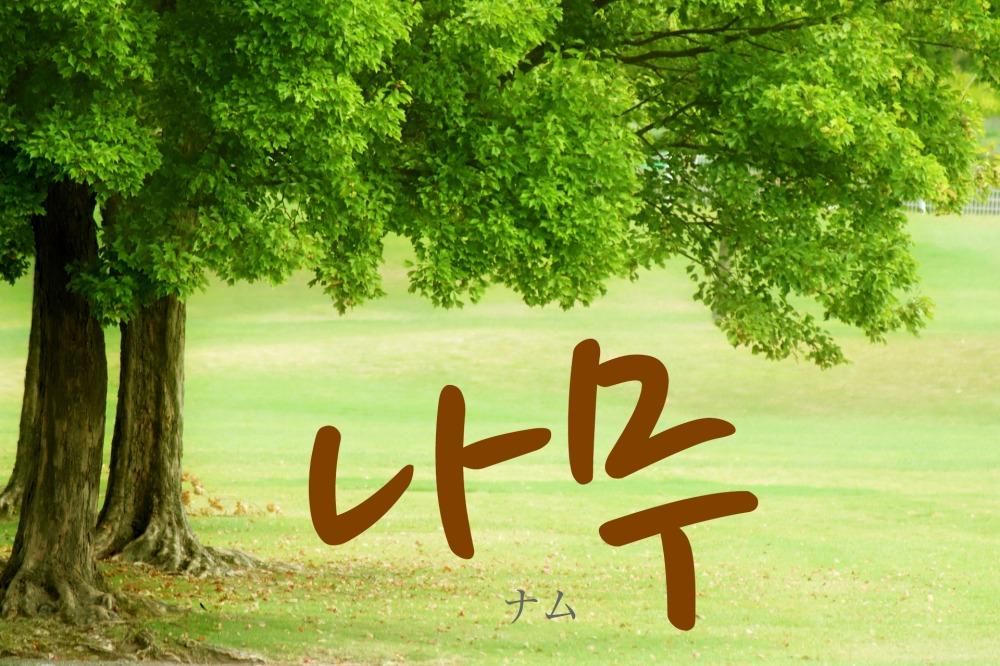 韓国語で「木(き)」の【나무(ナム)】をタメ語で覚えよう!