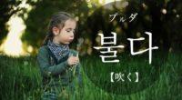韓国語で「吹く」の【불다(プルダ)】の例文・活用や発音は?タメ語で覚えよう!