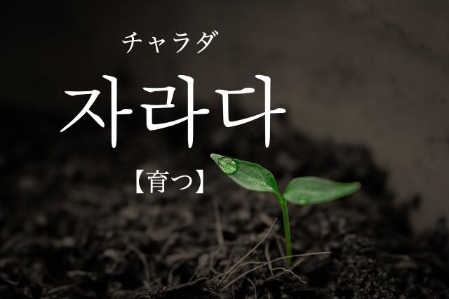 koreanword-grow-up