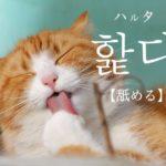 koreanword-lick