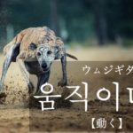 koreanword-movement