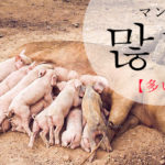koreanword-many