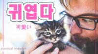 韓国語で「可愛い」の【귀엽다(クィヨプタ)】の例文・活用や発音は?