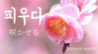 韓国語で「咲かせる」の【피우다(ピウダ)】の例文・活用や発音は?